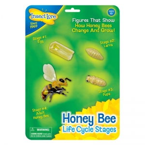 BEE LIFE CYCLE STAGES