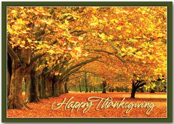 Canopy of Gold Thanksgiving Cards