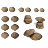 Tactile Shells, Set of 36