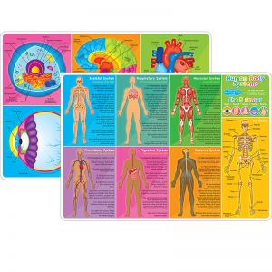 "Smart Poly Learning Mats, 12"" x 17"", Double-Sided, Human Body Systems & Anatomy, Pack of 10"