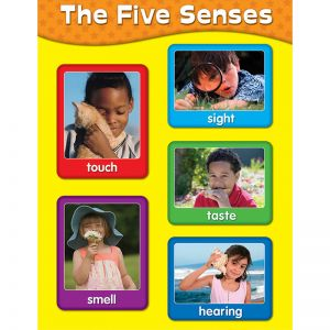 The Five Senses Chart, Pack of 6