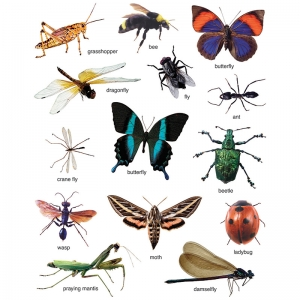 Photographic Shape Stickers, Insects