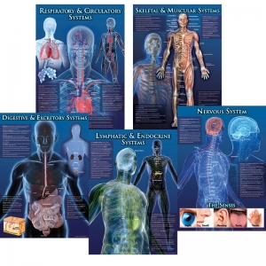 HUMAN BODY FACTS BB SET