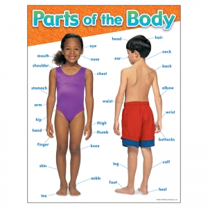 CHART PARTS OF THE BODY